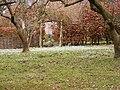 Snowdrop Field - geograph.org.uk - 1733404.jpg