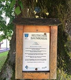 Sommer Linde und Baumkreis, Kappel am Krappfeld, Bezirk Sankt Veit an der Glan, Kärnten.jpg