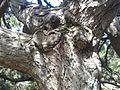 Spil Dağı Milli Parkı - 14.jpg