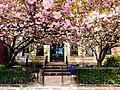 Spring in Brooklyn with COVID rainbow, April 2020.jpg