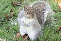 Squirrel - January 2010 (4241258926).jpg