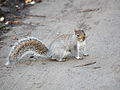 Squirrel on pathway.jpg