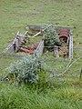Starr-010717-0054-Buddleja davidii-invading pasture-Kula-Maui (24533038385).jpg