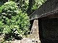 Starr-110330-4263-Costus speciosus-habitat view bridge-Keanae-Maui (24785883810).jpg