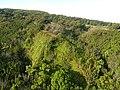 Starr-141014-2196-Caesalpinia decapetala-aerial view-Kakipi Gulch Haiku-Maui (25154045551).jpg