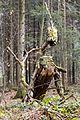 Sternwalddrache (Thomas Rees) jm26387.jpg