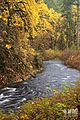 Streaming Through Autumn (8156546629).jpg