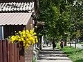 Street Scene with Flowers - Poltava - Ukraine (42920314615).jpg