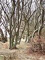 Stripwood, Buskin. - geograph.org.uk - 148692.jpg