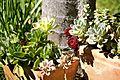 Succulent Plants (6730879307).jpg