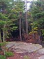 Summit of Balsam Lake Mountain.jpg