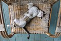 Supine cat sleeping on the back on a bamboo and wicker armchair in Don Det Laos.jpg