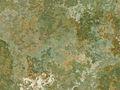 Surface Texture 003.jpg