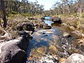 Surveyors Creek.jpg