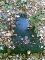Svin grave.jpg