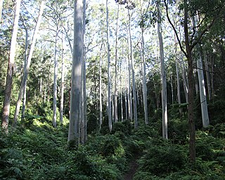Blue Gum High Forest