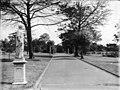 Sydney Botanic Gardens, 1900.jpg