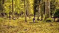 Türi Kesklinna kalmistu.jpg