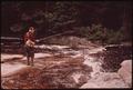 TROUT FISHERMAN FISHING ON TWITCHELL CREEK NEAR BIG MOOSE NEW YORK, IN THE ADIRONDACK FOREST PRESERVE - NARA - 554520.tif