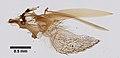 Tabanidae (YPM IZ 098612) 001.jpeg