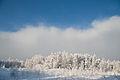 Talv Saarnakõrves, Harjumaal.jpg