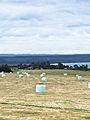 Taupo Hay Field-2481.jpg