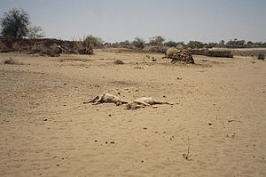 International response to the War in Darfur - Dead animals lie in the middle of a burned and looted village in Darfur