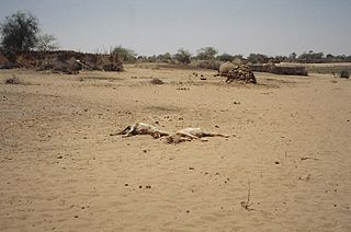 International response to the War in Darfur