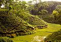 Tea Garden near Srimangal, Sylhet, Bangladesh.jpg