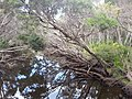 Telegraph Saddle to Sealers Cove Track, Wilsons Promontory National Park 10.jpg