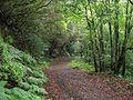 Teneriffa - Nordost - Wanderung durch den Lorbeerwald am Cruz de la Carmen - panoramio (3).jpg