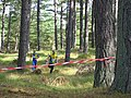 Tentsmuir Forest, Kinshaldy. - geograph.org.uk - 58153.jpg