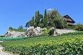 Terrasses de Lavaux - panoramio (25).jpg