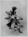 Territory in bird life p131.png
