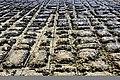 Tessellated Pavement 05.jpg