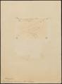 Thamnophilus semicinereus - 1855 - Print - Iconographia Zoologica - Special Collections University of Amsterdam - UBA01 IZ16400415.tif