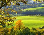That Yellow In The Green - panoramio.jpg