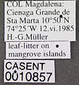 Thaumatomyrmex atrox casent0010857 label 1.jpg