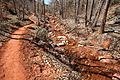 The 13 mile return trail, Kolob Canyons, Walk to the Kolob Arch (Zion National Park) (3439314581).jpg