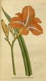 The Botanical Magazine, Plate 64 (Volume 2, 1788).png