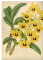 The Orchid Album-01-0041-0013.png