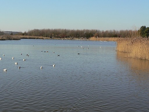 The lake at Rushcliffe Country Park - geograph.org.uk - 1745610