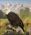 This is Cheyenne, a seven-year-old female bald eagle, who appeared (here in front of a painting backdrop) as part of a presentation by HawkQuest, a nonprofit environmental-education organization that LCCN2015633362.tif