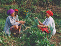 Three farmers working Indonesia.jpg