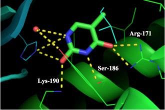 Thymidine phosphorylase - Arg-171, Ser-186, and Lys-190 interactions with thymine in ligand site of thymidine phosphorylase