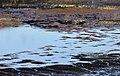 Torres del Paine, lagunilla 3.jpg
