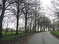 Tree-Lined Road and Maryfield Church - geograph.org.uk - 765194.jpg
