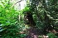 Tree Carving Sculpture in Stanley Park (14290135909).jpg