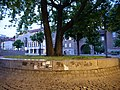 Tree at U Rathaus Spandau 2019-06-16 03.jpg