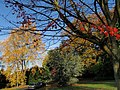 Tree colours, University of Exeter campus - geograph.org.uk - 1041627.jpg